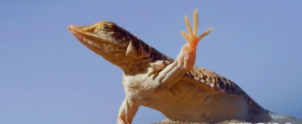 The Internet Relates to This Sassy, Dancing Lizard on a Deep, Spiritual Level