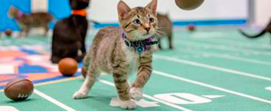 Brace Yourselves — the Kitten Bowl Is Nearly Here