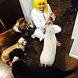 Miley Cyrus surrounded herself with pets on Memorial Day weekend.