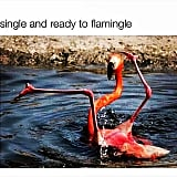 When this flamingo just gets you.