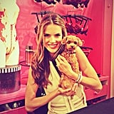 Alessandra Ambrosio posed with a furry fan. Source: Instagram user alecambrosio