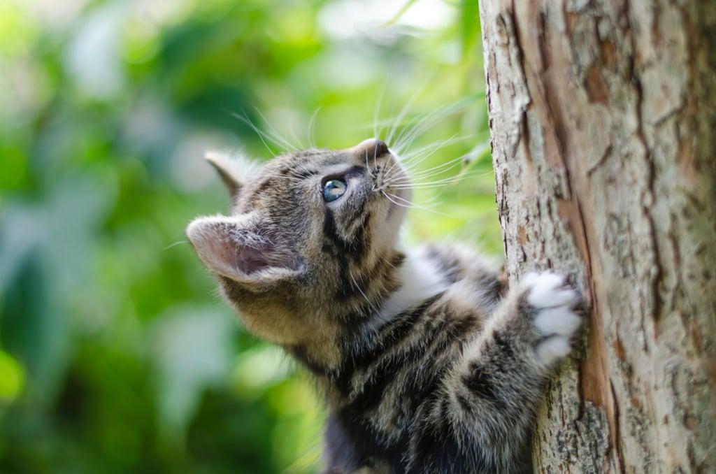 Look at this adventurous little tree climber!