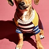Ware of the Dog Crazy Stripe Lambswool Dog Sweater