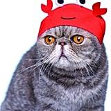 Kitan Club Cat Cap