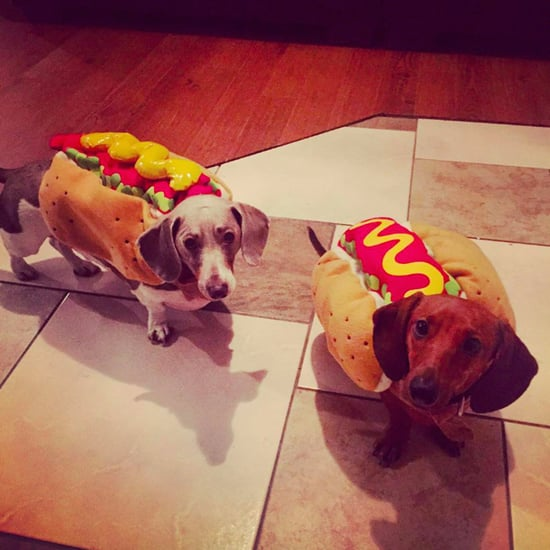 Dachshunds Dressed as Hot Dogs