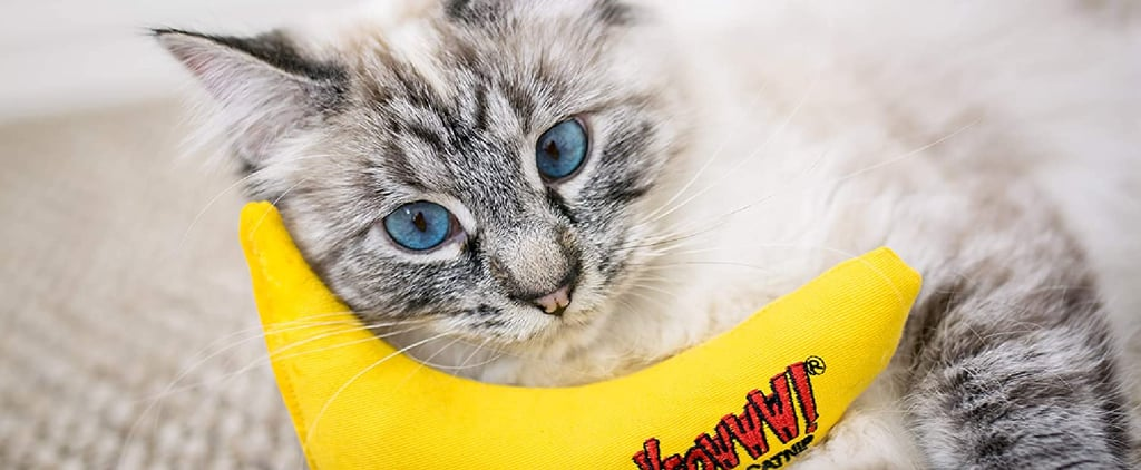 Shop These Chew Toys For Cats That Promote Good Oral Health