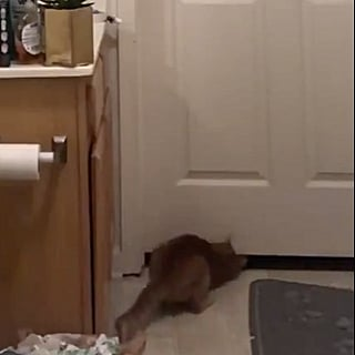 Video of Cat Opening the Bathroom Door