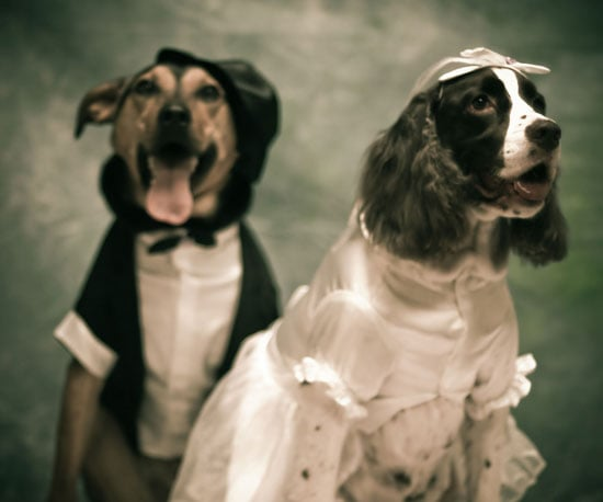 How to Photograph Dogs at Weddings