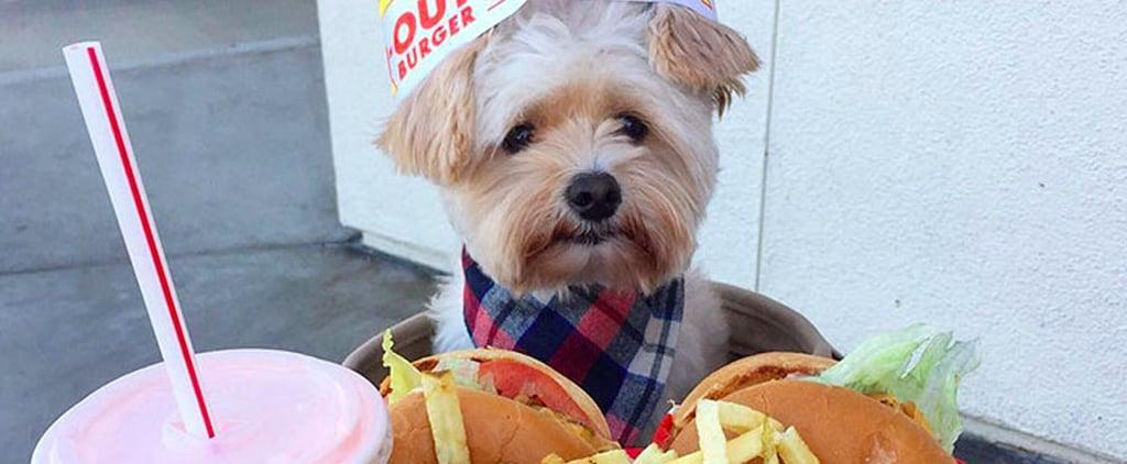كلب تم إنقاذه من التشرد يتناول الطعام في المطاعم