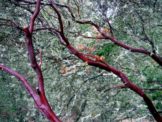 Midday Muse: Beautiful Branches