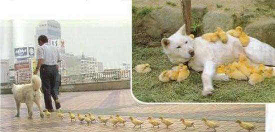More Interspecies Love