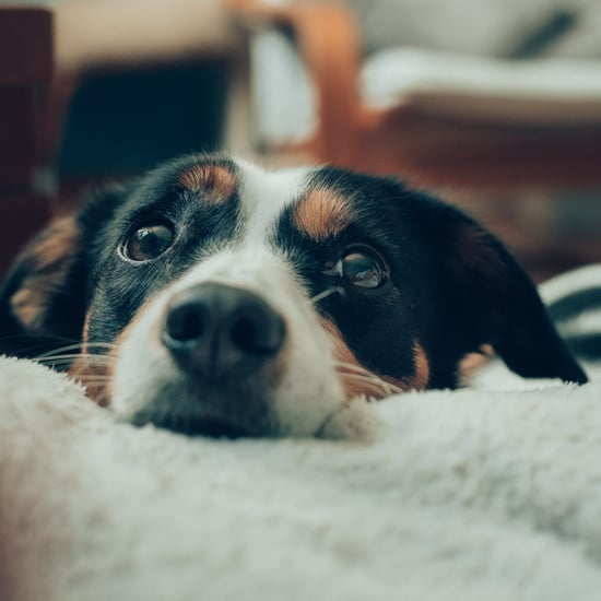 How to Help Dogs Who Are Scared of Thunder and Loud Noises