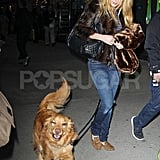 Blake Lively was on dog-walking duty for Ryan Reynolds's pup, Baxter.