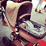 The Bugaboo Cameleon 3 is now available in a Sahara kit, complete with tan leather covering the handlebar and bumper bar.