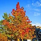 Autumn - again ;)