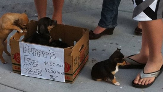 Puppies For Sale on Side of Street