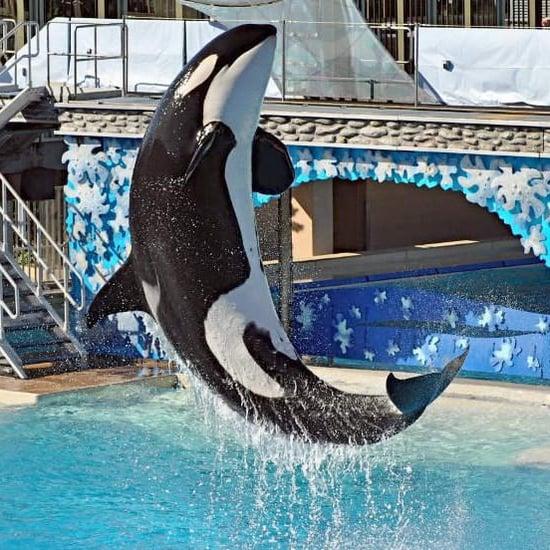 California SeaWorld Ban