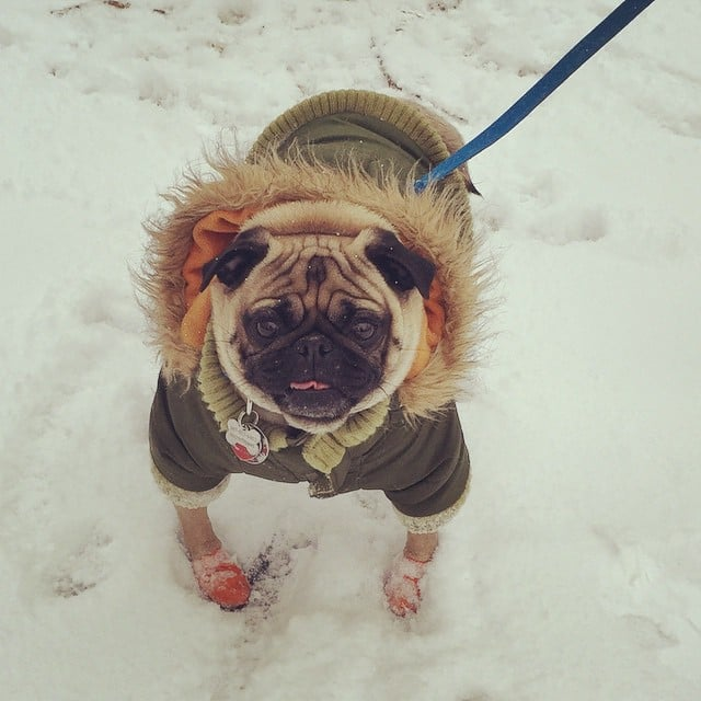 We'd Totally Wear These Very Stylish Dog Coats