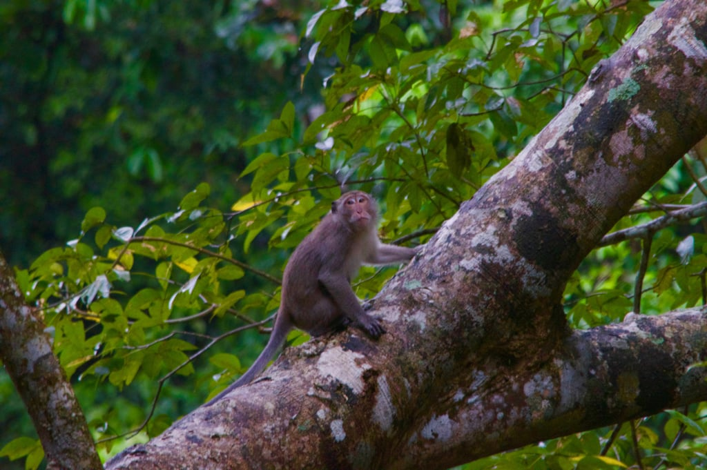 Watch the monkeys play right outside your front door