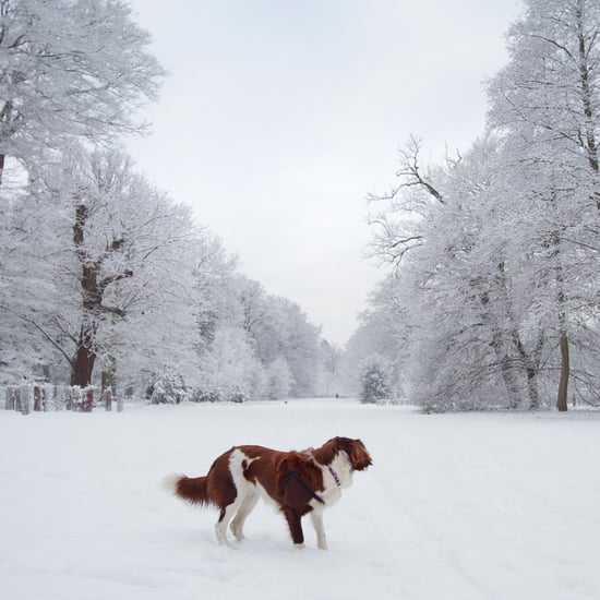 How to Prepare Your Pet For Winter