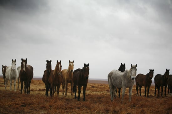 Spending Gone Wild: Proposal to Euthanize the West's Horses