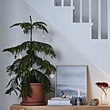 Värmer Plant Pot With Saucer