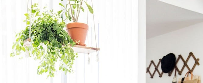 14 Ways to Incorporate Hanging Plants Into Your Home