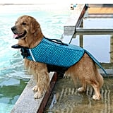 This Doggo Looks Surprisingly OK With Being Strapped Into One