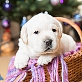 Cute Photos of Dogs in the Winter