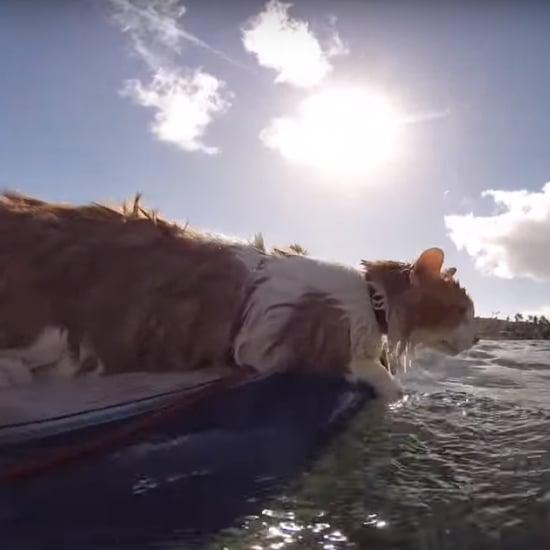 فيديو لقطّة تركب الأمواج