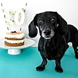 DIY Healthy Dog Birthday Cake Recipe