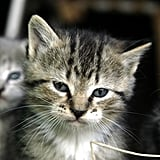 """""""I may be a kitten, but I'm old enough to know when you're being stupid."""""""