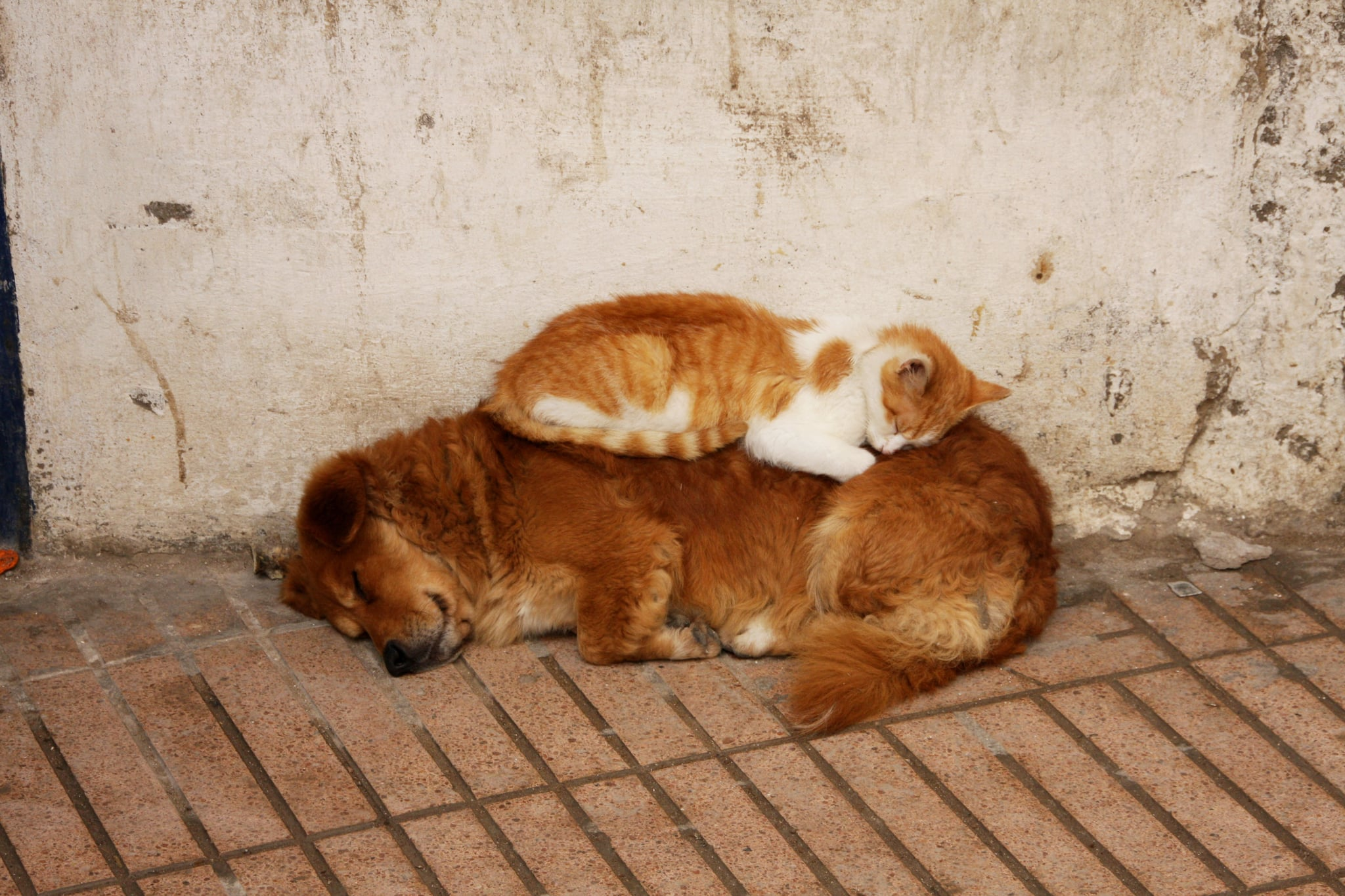 Dog and cat sleeping peacefully together, best friends
