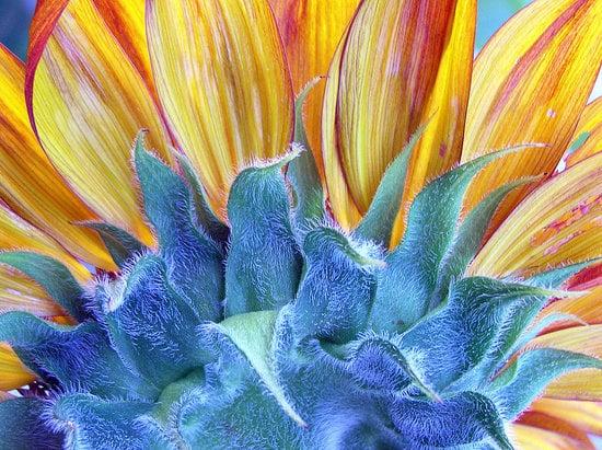 Su Casa: Sunny Days and Beautiful Blooms