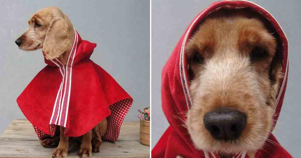 Best Dog Costumes on Etsy