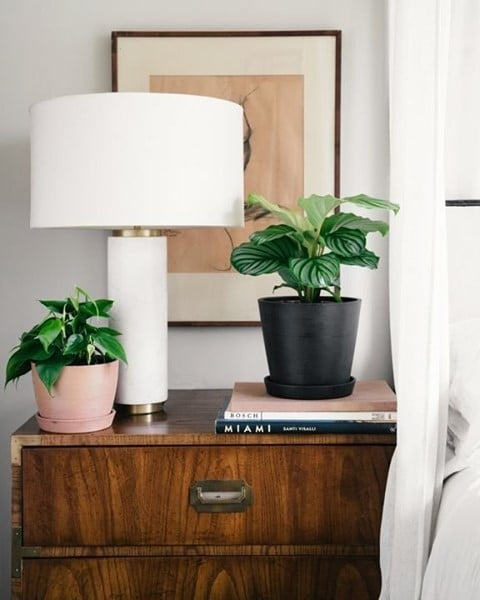 Shop Plants That Cool Your Home