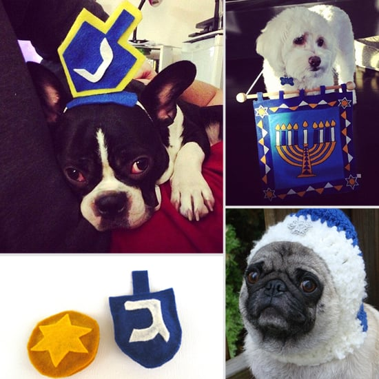 Happy Hanukkah! Celebrate the Season With Your Pet