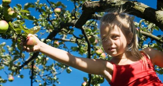 Kid-Friendly Apple Recipes