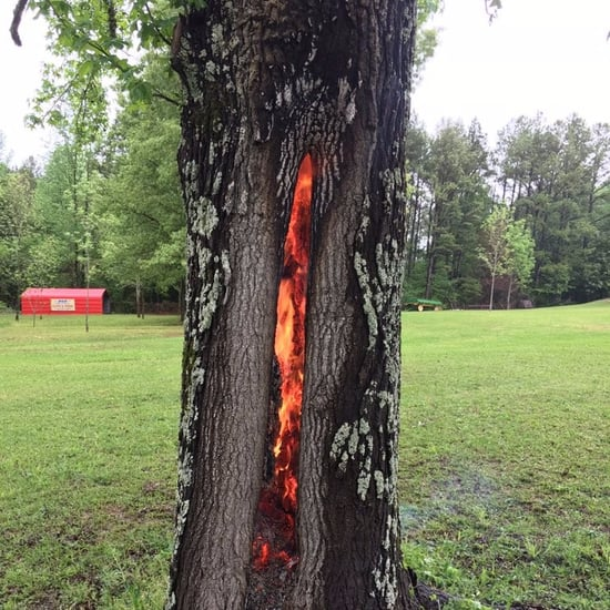 Lightning Strike Tree Photo