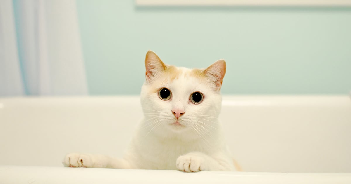 I Couldn't Figure Out Why My Cat Loves Sitting in the Bathtub, So I Asked a Vet