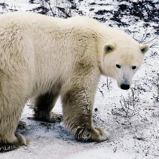 Obama Bans Arctic Oil Drilling