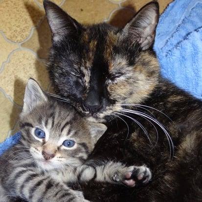 A Kitty Cuddle