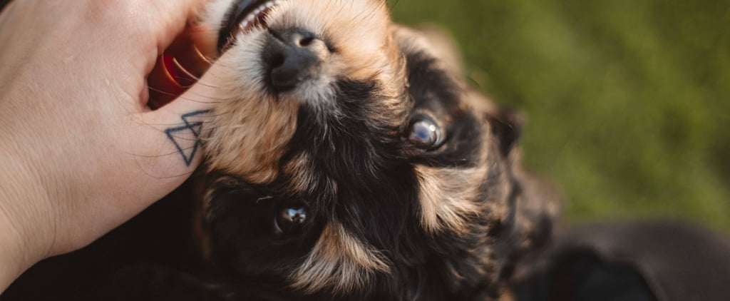 Zodiac Signs That Make the Best Pet Owners