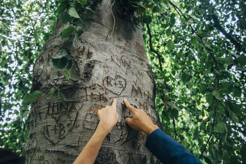Carve your initials into a tree.