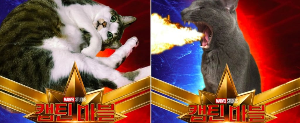 Captain Marvel Cat Photoshop Tweets