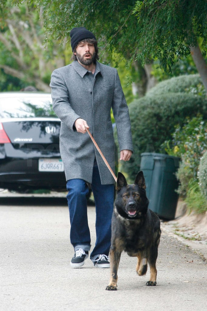 Ben Affleck took his German Shepherd out for a walk near his Brentwood home yesterday. Proud dad Ben was without the rest of his family, which now includes his son Samuel. Jennifer Garner gave birth last week to the third Garner-Affleck child, who joined big sisters Violet and Seraphina. Ben shared the exciting news on his Facebook page and he also took to the social media platform yesterday to promote a new release of The Town on DVD. He poked fun at his long hairstyle and overgrown facial hair in the message, joking that he's playing Barry Gibb from the Bee Gees. Ben kept his longer locks under a hat during his latest outing, but his beard was still on full display.