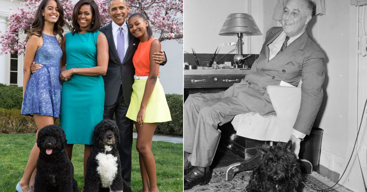 Just Some of the Cutest Fur Babies That Have Lived in the White House