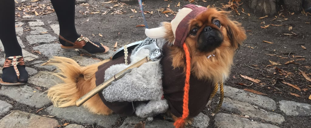 20 Epic Costume Ideas From New York's Legendary Halloween Dog Parade