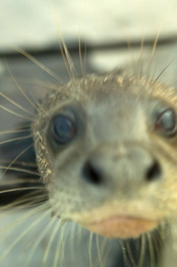 Out and About: Rhode Island's Seal Watch Tours