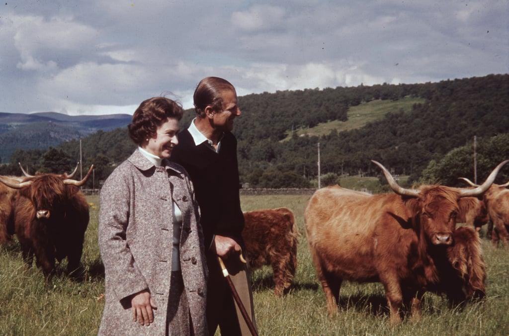 Her majesty owns around 100 Highland cattle